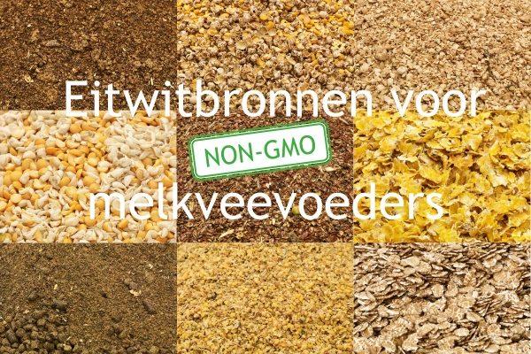 eiwitbronnen-voor-non-gmo-melkveevoeders