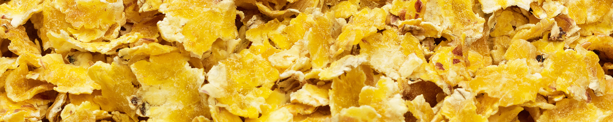 More milk, lower costs and healthy cows with gelatinized corn flakes