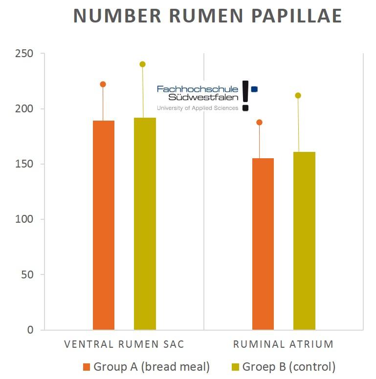 Number rumen papillae Calves bread meal